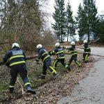 Odstranitev podrtega drevesa 2020/3